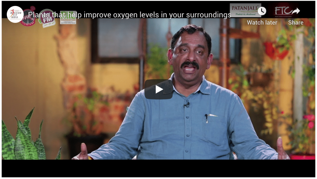 Plants that help improve oxygen levels in your surroundings